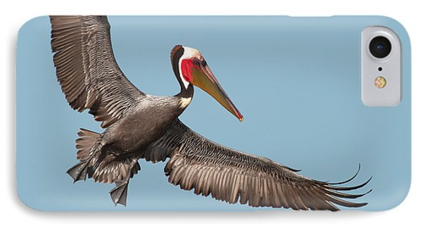 IPhone Case featuring the photograph California Brown Pelican With Stretched Wings by Ram Vasudev
