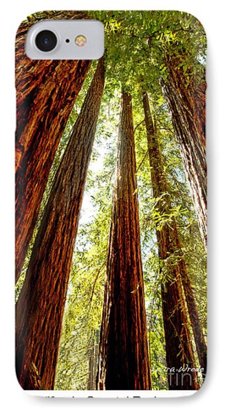 California Coastal Redwoods Phone Case by Artist and Photographer Laura Wrede