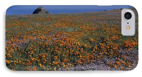 California Gold Poppies And Baby Blue Eyes IPhone Case