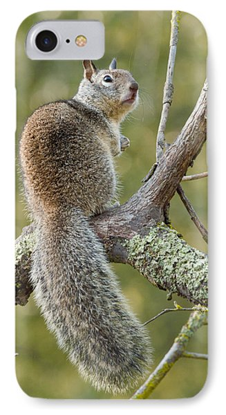 IPhone Case featuring the photograph California Ground Squirrel by Doug Herr