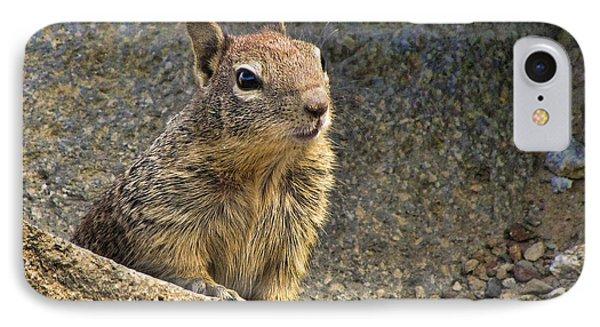 California Ground Squrrel IPhone Case