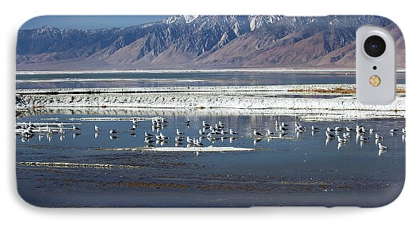 California Gulls On Owens Lake IPhone Case by Jim West