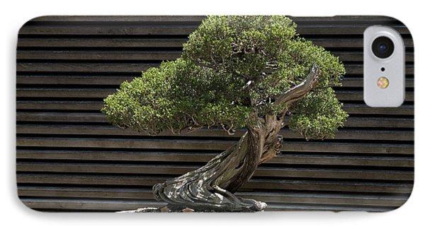 California Juniper Bonsai Tree IPhone Case by Jason O Watson