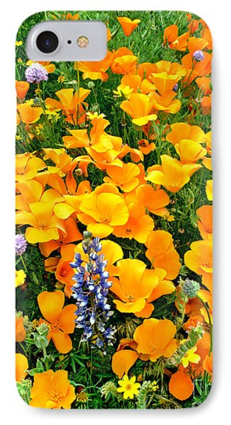 California Poppies And Betham Lupines Southern California IPhone Case by Dave Welling