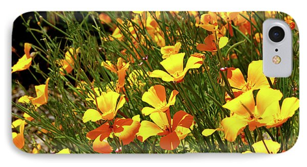 California Poppies IPhone Case by Ed  Riche
