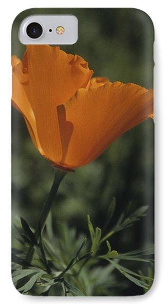California Poppy Close Up IPhone Case