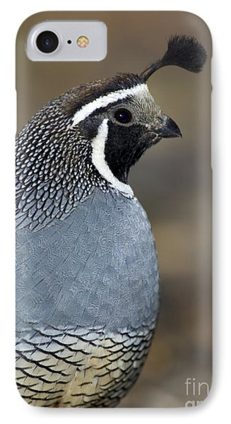 California Quail IPhone Case by Anthony Mercieca
