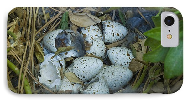 California Quail Nest Post Hatching IPhone Case by William H. Mullins