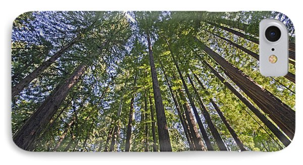 California Redwood Forest IPhone Case