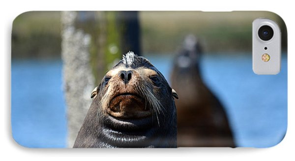 California Sea Lion IPhone Case by Gayle Swigart