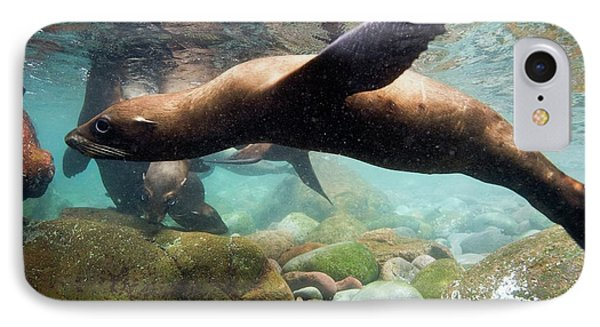 California Sea Lion In Shallow Water IPhone Case by Christopher Swann