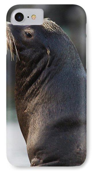 California Sea Lion IPhone Case by Ken Archer