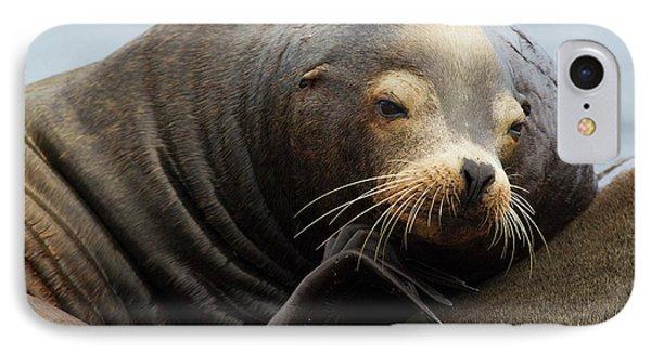 California Sea Lion Resting IPhone Case by Ken Archer