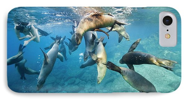 California Sea Lions And Snorkeller IPhone Case by Christopher Swann