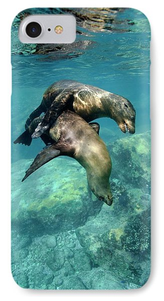 California Sea Lions In Shallow Water IPhone Case by Christopher Swann