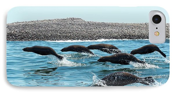 California Sea Lions Leaping IPhone Case by Christopher Swann