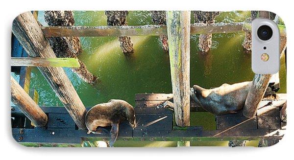 California Sealions Under The Santa Cruz Pier Phone Case by Artist and Photographer Laura Wrede