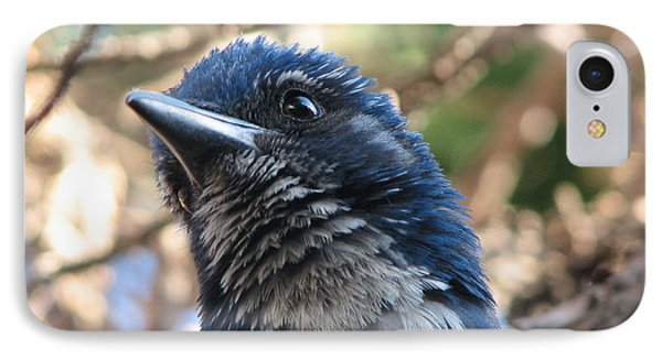 California Western Scrub Jay IPhone Case