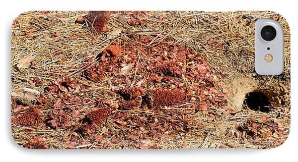 Californian Ground Squirrel Burrow IPhone Case by Ashley Cooper