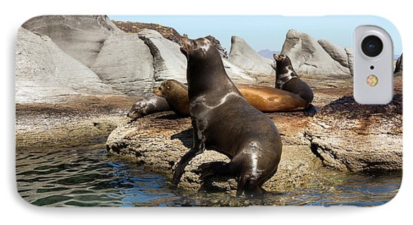 Californian Sea Lions IPhone Case by Daniel Sambraus