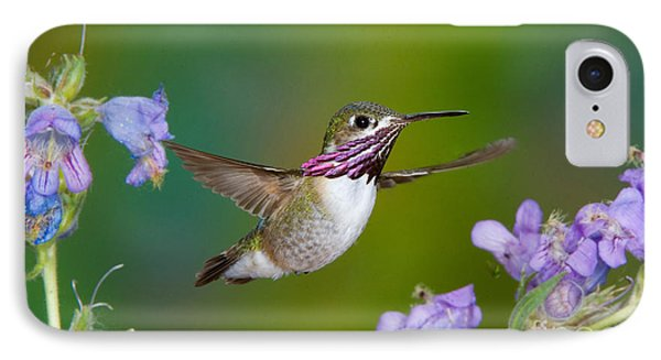 Calliope Hummingbird Phone Case by Anthony Mercieca