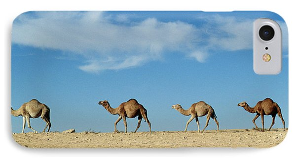 Camel Train IPhone 7 Case by Anonymous