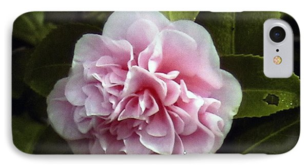 IPhone Case featuring the photograph Camellia In Rain by Patrick Morgan