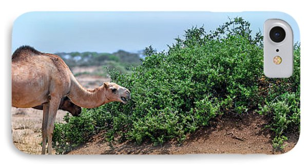 Camels Eating Salt Cedar IPhone Case by Babak Tafreshi