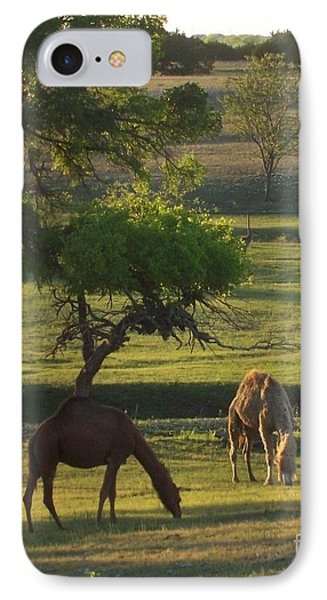 Camels Grazing IPhone Case