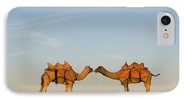 Camels Stand Face To Face In The Thar IPhone 7 Case
