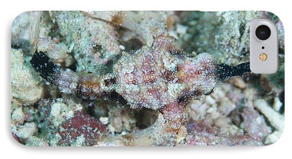 Camouflaged Pegasus Sea Moth IPhone Case by Scubazoo