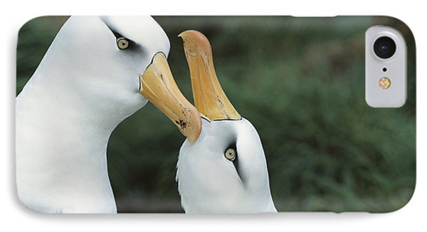 Campbell Albatrosses Courting Campbell Phone Case by Tui De Roy