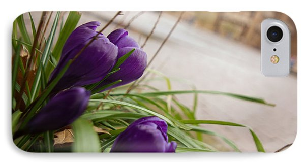 IPhone Case featuring the photograph Campus Crocus by Erin Kohlenberg