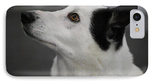 Canaan Dog IPhone Case