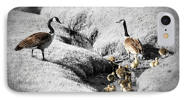 Canada Geese Family IPhone Case by Elena Elisseeva