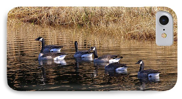 Canada Geese IPhone Case by Sharon Talson