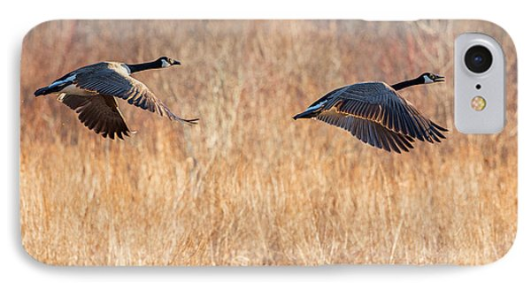 Canada Geese Square IPhone Case