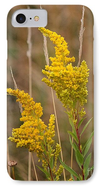 Canada Goldenrod IPhone Case by Erica Hanel