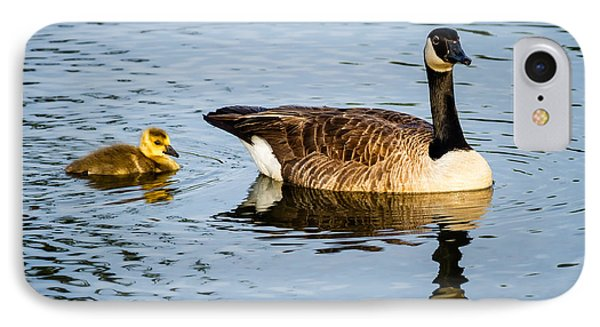 Canada Goose And Gosling Phone Case by Dawna  Moore Photography