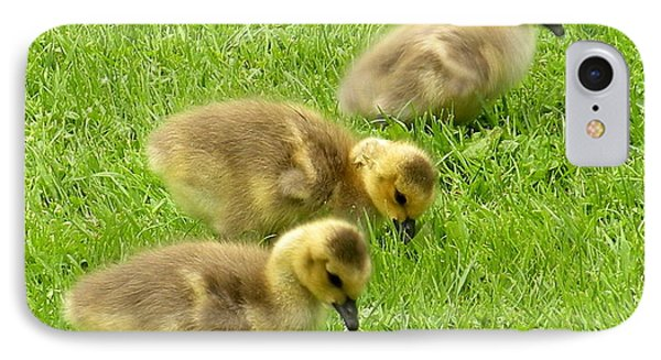 Canada Goose Goslings IPhone Case by Brian Chase