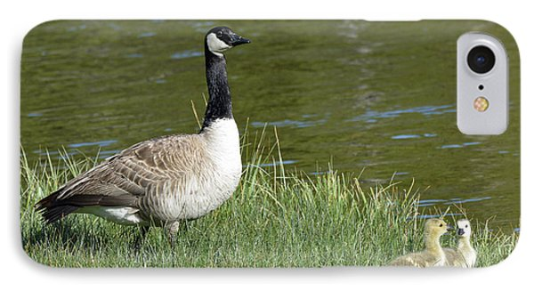 Canada Goose Mom With Goslings Phone Case by Bruce Gourley