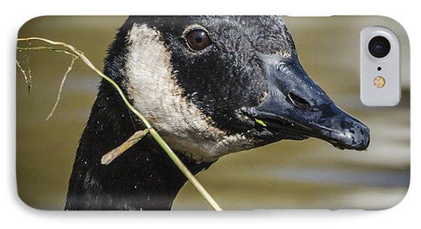 Canada Goose Portrait Square IPhone Case