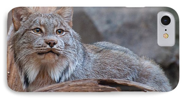 IPhone Case featuring the photograph Canada Lynx by Bianca Nadeau