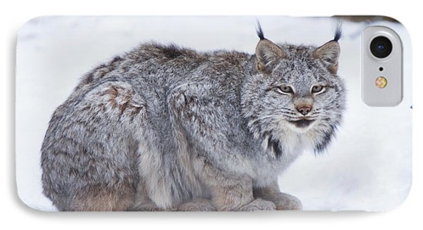 Canada Lynx Crouched On The Snowcovered IPhone Case by Doug Lindstrand