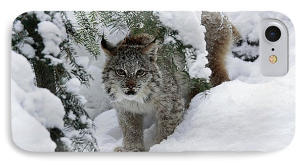 Canada Lynx Hiding In A Winter Pine Forest Phone Case by Inspired Nature Photography Fine Art Photography