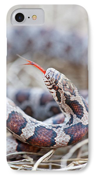Boa Constrictor iPhone 7 Case - Canada, Quebec, Riviere Des Prairies by Jaynes Gallery