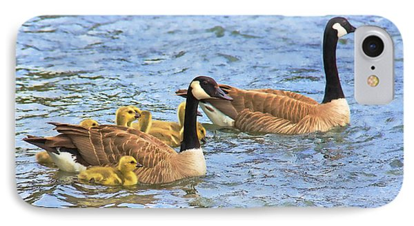 Canadian Geese And Goslings Blue Waters IPhone Case