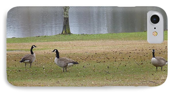 Canadian Geese Tourists IPhone Case by Joseph Baril