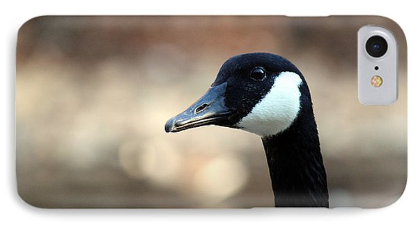 Canadian Goose IPhone Case by David Jackson