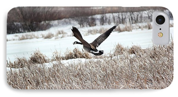 IPhone Case featuring the photograph Canadian Goose by Ryan Crouse